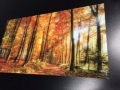 Acrylic Print: Fall Forest