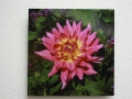 Acrylic Print: Pink Lotus Flower