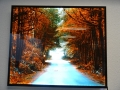 Acrylic Backlit Print: Nature Path Between Fall Trees