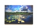Acrylic Print: Landscape with Lilly Pads