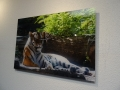 Acrylic Print: Tiger