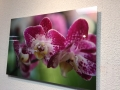 Acrylic Print: Pink Flowers