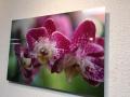 Acrylic Print: Pink Flowers