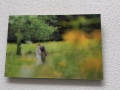 Acrylic Print: Wedding Couple Kissing In Green Field