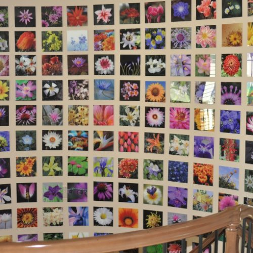 Acrylic print of multiple pictures of flowers.