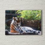 White-Brick-Tiger