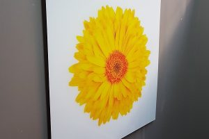 acrylic-sunshine-yellow