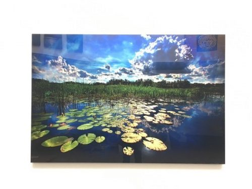 landscape-with-lilly-pads