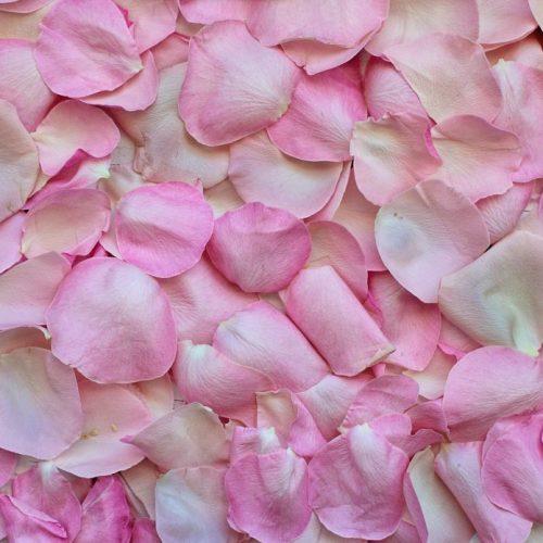 rose-petals-3194062_1920-1