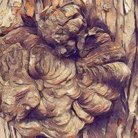 Abstract Acrylic Art Print: Tree Trunk