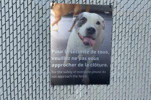 dog customer 1